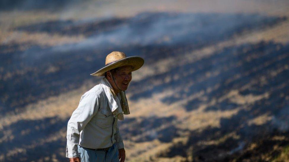 Prosečna starost japanskih farmera je 67 godina/Getty Images