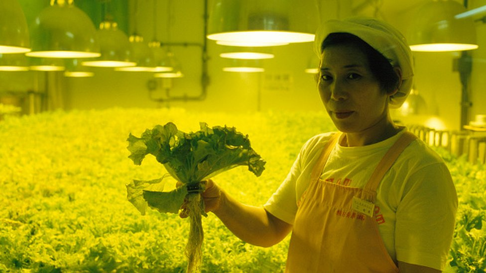 Broj fabrika biljaka u Japanu utrostručio se za samo deset godina/Getty Images